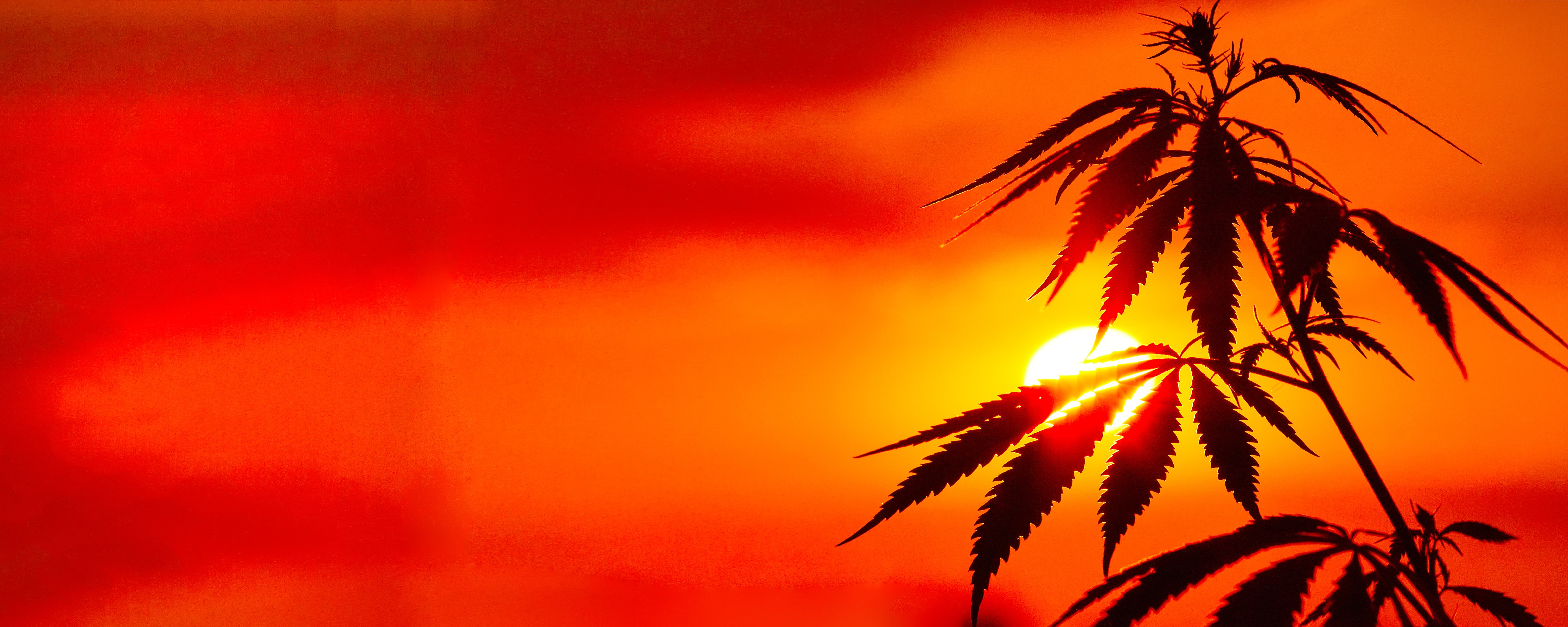 It's a new dawn for cannabis payment options.